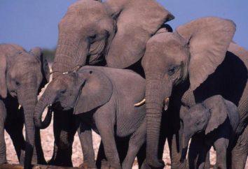 Das größte Tier der Welt: In der Beschreibung, Lebensraum und interessante Fakten