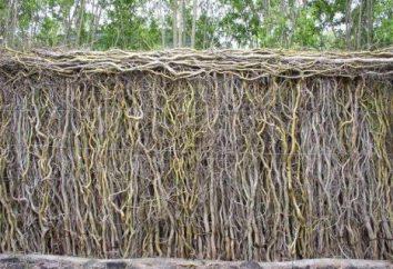 La clôture avec leurs mains au pays: une classe de maître. Comment faire une clôture dans le pays avec leurs propres mains?