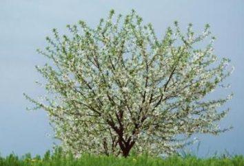 Posso spruzzare gli alberi durante la fioritura o meglio non farlo?