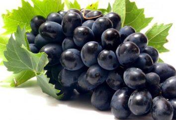 Uvas Furor: descripción de la variedad, la plantación y el cuidado
