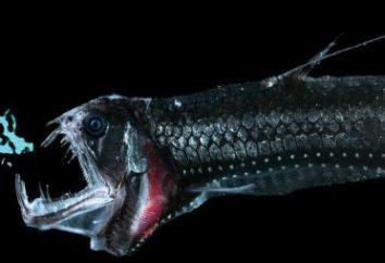habitants sous-marins inhabituels: qui vit sur le fond de l'océan?