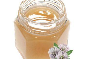 L'unico trifoglio dolce miele? proprietà utili e la composizione chimica