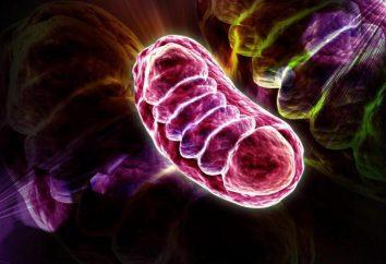 Mitochondrialnego syndrom dziecka