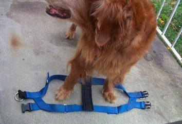Jak wybrać wiązkę dla psa, jak ubrać akcesorium?