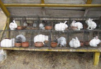 Comment faire des creux pour les lapins avec leurs mains