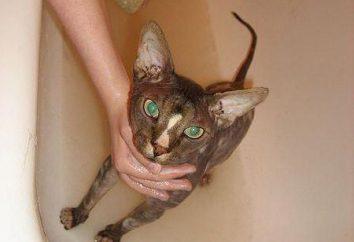 Cómo lavar un gato correctamente y con qué frecuencia?