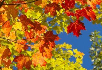 Deux faces d'une même pièce, ou ce qui est l'automne?