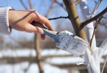 Caiação de árvores de fruto no outono – uma condição necessária para uma tranquila inverno e primavera floração