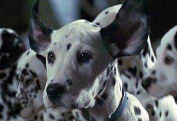 Films avec des chiens dans le rôle principal: aventure, comédie, drame: une liste des meilleurs