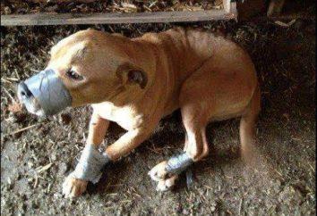 Okrucieństwo wobec zwierząt: Artykuł 245 Kodeksu Karnego. Kara za przestępstwo