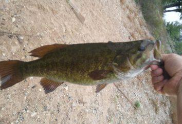 poissons qui fraient. Quand un poisson fraye? Pêche dans le frai: amendes