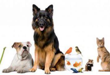 clínica veterinaria de Omsk: el trabajo para salvar vidas