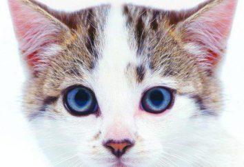 Dlaczego łysiny u kota?