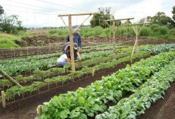 Offrez-vous un jardin miraculeux, en utilisant la méthode Mitlajdera