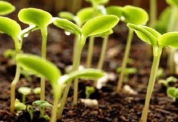 Che cosa piantare nel mese di aprile in piena terra?