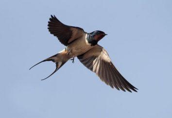 Riddle über schlucken: Vertrautheit mit der Welt der Vögel