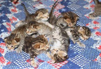 nombres bonitos para gatos – una demostración del amor propietarios
