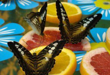 """Ekaterinburg: """"Butterfly Park"""" – una vera e propria giungla nel cuore della capitale degli Urali"""