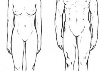 Körperproportionen