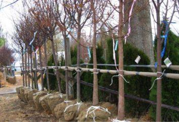 Quand au printemps pour planter des arbres? Comment planter des arbres au printemps?