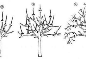 Detaillierte Schema Trimmen Birnen Feder