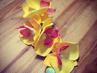 Master-class: orchidée de famiraman propres mains
