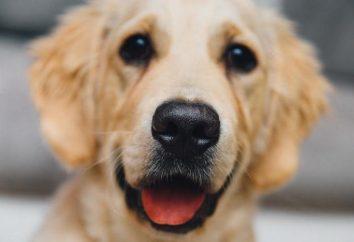 Zitate über Hunde mit Bedeutung. Was sind sie unsere Freunde?