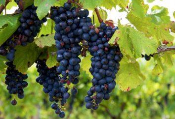 Uve Isabella: proprietà utili, descrizione delle varietà