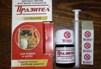 """""""Prazitel"""" – suspensión para los gatos y gatitos (instrucción y composición)"""
