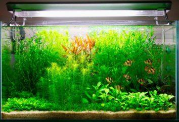 CO2 – co to jest? Zastosowanie CO2 w akwarium. Układ zasilania CO2
