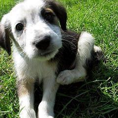 """Krople """"Advantix"""" dla psów: niezawodna ochrona i zapobieganie atakom pasożytów i kleszczy owadów"""