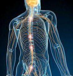 Qual è il sistema nervoso? Attività del sistema nervoso, condizione e protezione