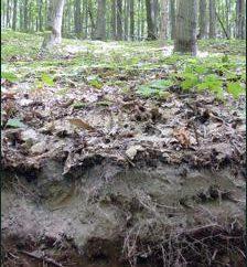 suoli foresta grigio: caratteristiche, condizioni di formazione, proprietà