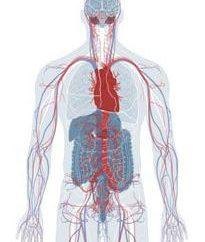 Para fortalecer los medicamentos y productos vasculares. ¿Cómo fortalecer los receptáculos