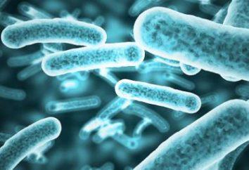 Nützliche und schädliche Bakterien. Was sind die gefährlichsten Bakterien für den menschlichen