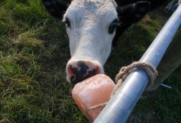 Lizać sól w diecie zwierząt gospodarskich