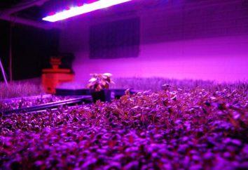 Lampada per le piante: i principali vantaggi