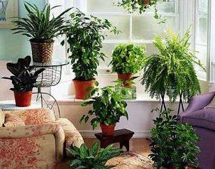 Lo que las flores deben estar en la casa? Las plantas de interior más útiles