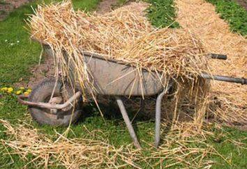 L'herbe veuve – qui est-ce? L'origine et l'interprétation phraséologisme