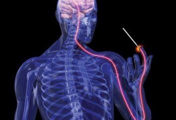 Bedeutung des Nervensystems Funktionen des Nervensystems