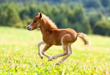 Jak nazwać konia? Najlepsze opcje