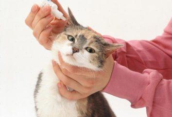 Gouttes pour les oreilles pour les chats par les tiques. Un bon remède pour les mites d'oreille chez les chats