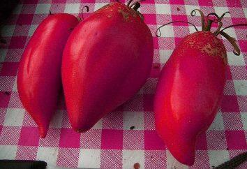 """""""Becco d'aquila"""" (pomodoro): recensioni e coltivazione"""