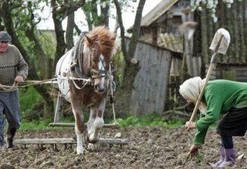 La siembra de papas en Siberia. Fechas, métodos, fertilización apropiada