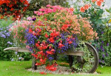 As melhores flores para vasos de flores ao ar livre