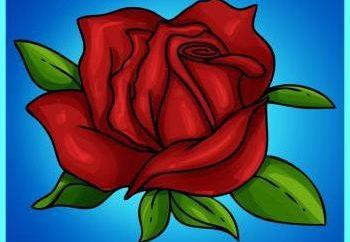Jak narysować różę w etapach