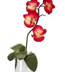 Dlaczego liście żółkną w pokoju orchidei?