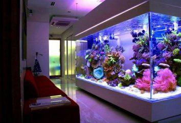 Perché i pesci muoiono nell'acquario? Acquario per i principianti