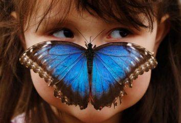 I wiesz, co jedzą motyle?