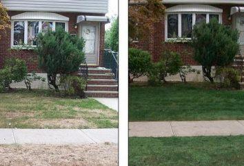 Hidrossemeadura gramado: Benefícios e tecnologia método. Hidrossemeadura próprias mãos